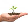 Doradztwo w zakresie obrotu i konfekcjonowania środków ochrony roślin